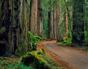 Ulrich-armstrong-redwoods-405nr042x1forWeb